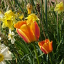 April_25th_09_008