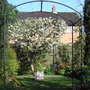 Apple blossom - 2009