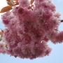 Garden_april_09_017