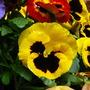 My_garden_09_011