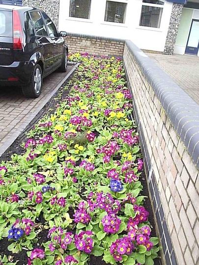 Flower_beds_in_Mayfield_road_2009-03-10_006.jpg