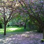 Blossom blanket, Hanworth 250409