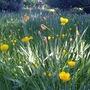 Wildflowers, Twickenham Riverside