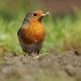 Robin.. or was it Batman?