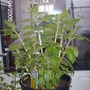 Our_garden_in_2009_171