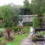 my garden in june/july 2007 no 2