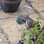 squirrel the garden thief - is anyone looking