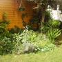summer back garden