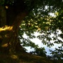 Twickenham Riverside, Sun setting