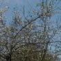 plum_in_blossom.jpg