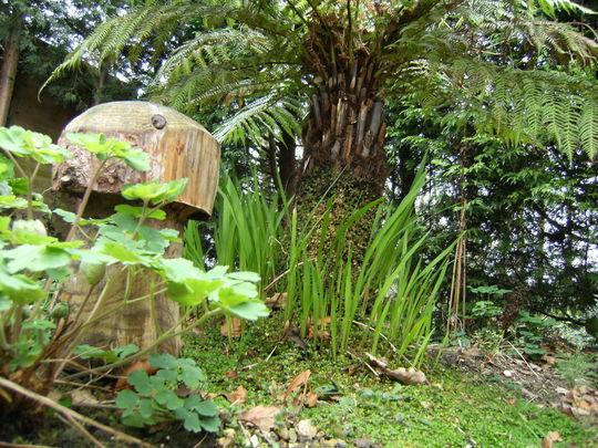 Crocosmia by tree fern