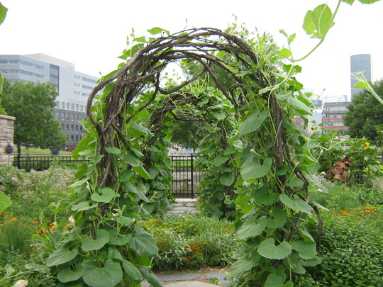 Moonflower on bentwood arches...Flora, Mtl. 2007