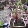 Gardenborder29.4.09
