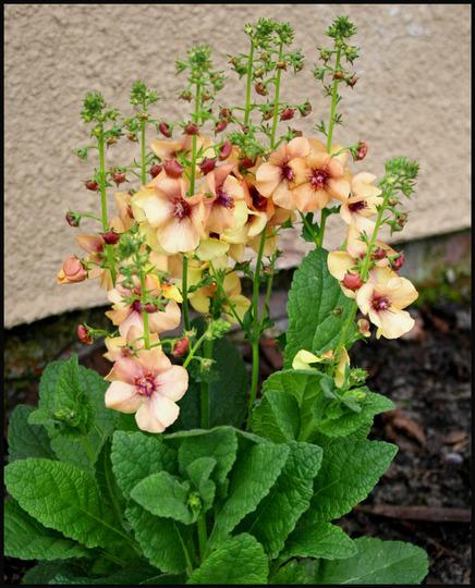 My Garden 2007 4