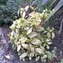 Garden_pics_013