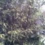 Garden_pics_021