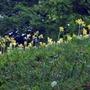Blumenwieseweb