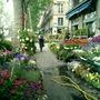 Spring plants in Paris