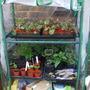 Mini greenhouse contents!