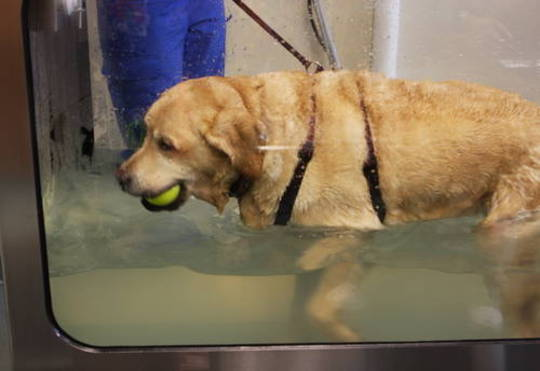 Lucy's Hydrotherapy Session