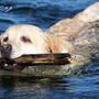 Lucy - Waterdog