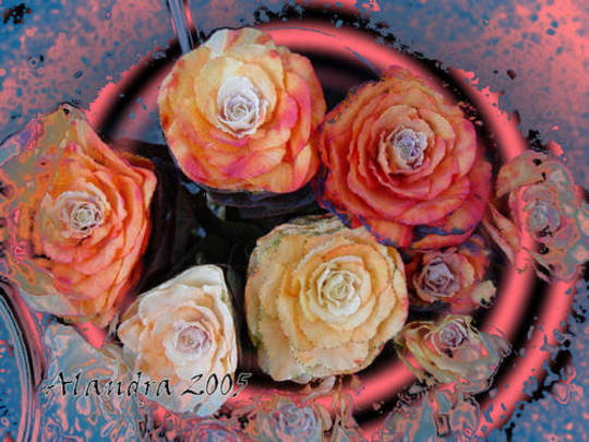 Dreamtime Roses - Lovely Imposters (dyed kale)