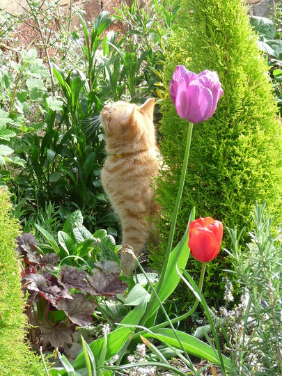 Teddy 's found the Blackbird's nest..........:o(