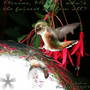 Feisty_hummingbird_beak_open_at_mirror_ball_50657_