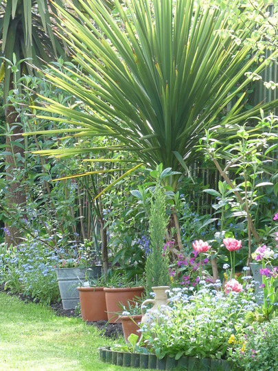Cordyline and Forget-me-nots
