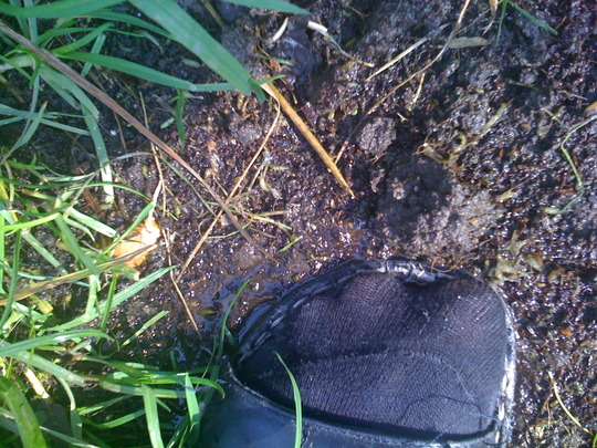 boggy patch