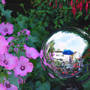 "Gazing Ball planter pot reflections (Lavatera trimestris (Mallow)   ""Silver Cup"")"