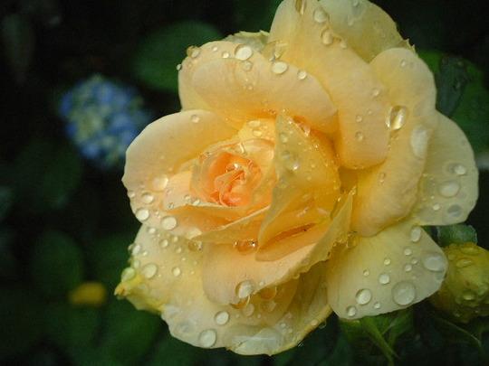 Honey Bouquet.jpg