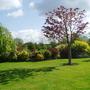 A Corner of my Garden Today
