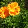 020907flowers_133
