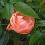 Orange Mothers Day