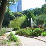 City Botanic Garden - Brisbane, Queensland