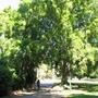 City Botanic Garden - Brisbane, Queensland