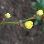 Flower Buds Opening2!!!