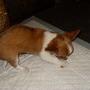 New_pup