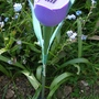 Tulip Solar light.........