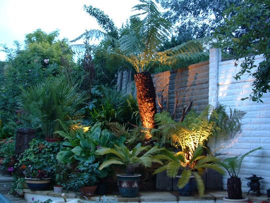 Tree fern area at night