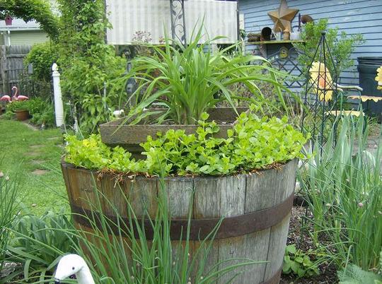 Tub in the herb garden