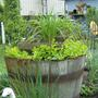 Tub in the herb garden