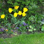 My Bargain Buy Frilly Pansies Planted with Varigated Nasturiums i grew myself