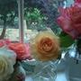 A Peek out into my Little Rose Garden