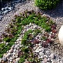 Detail of Rhythm and Passion garden, Malvern spring show