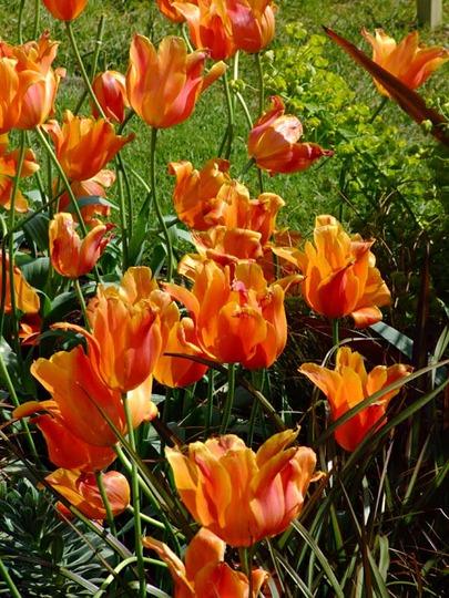 View from the Circle garden, Malvern spring show