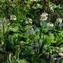 Detail of planting, Moondance Garden, Malvern spring show