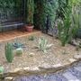 Cacti Area