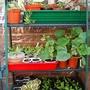 091_mini_greenhouse_10_may_09
